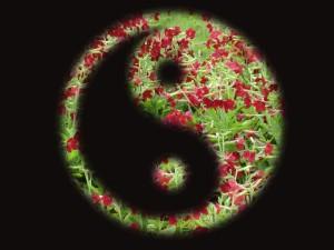 yin-yang-1712063_1920
